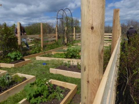 2016-05-May15-GardenProject (2)