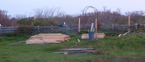Work underway on Celia Thaxter's garden