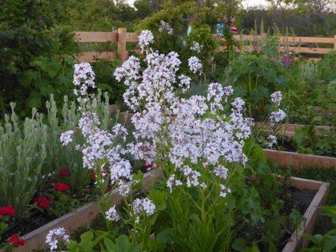 Celia's Garden, after recent improvements