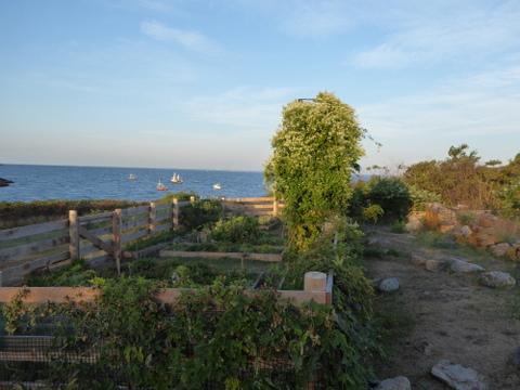 Celia's garden